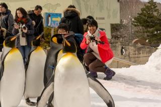 Mani at the Penguin Walk