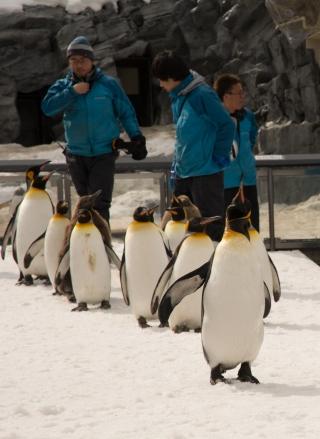 Penguin Walk, Asahiyama