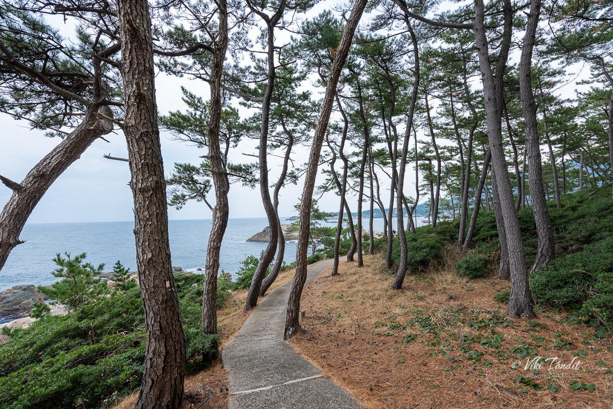 Path towards Izumo Matsushima
