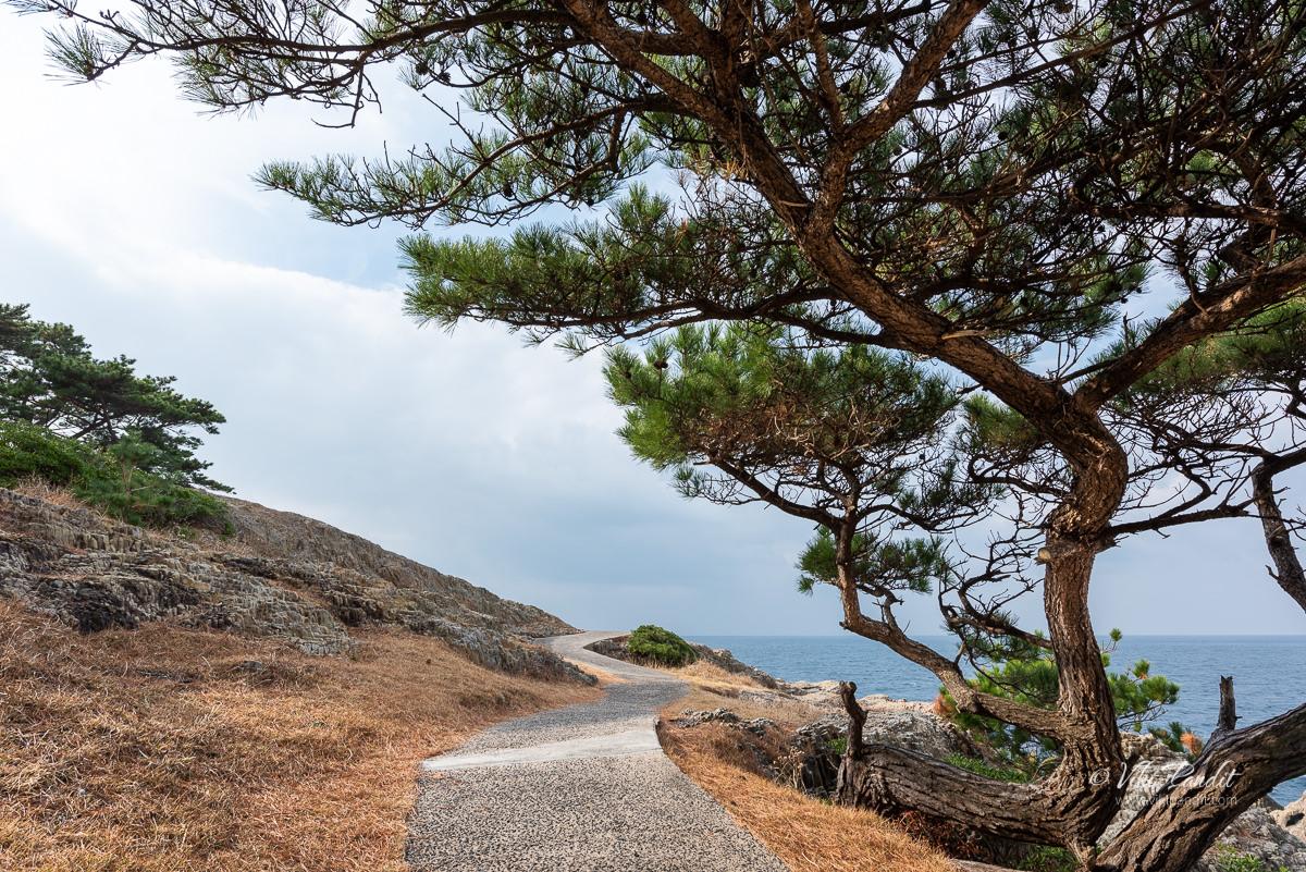 Trail around Cape Hino