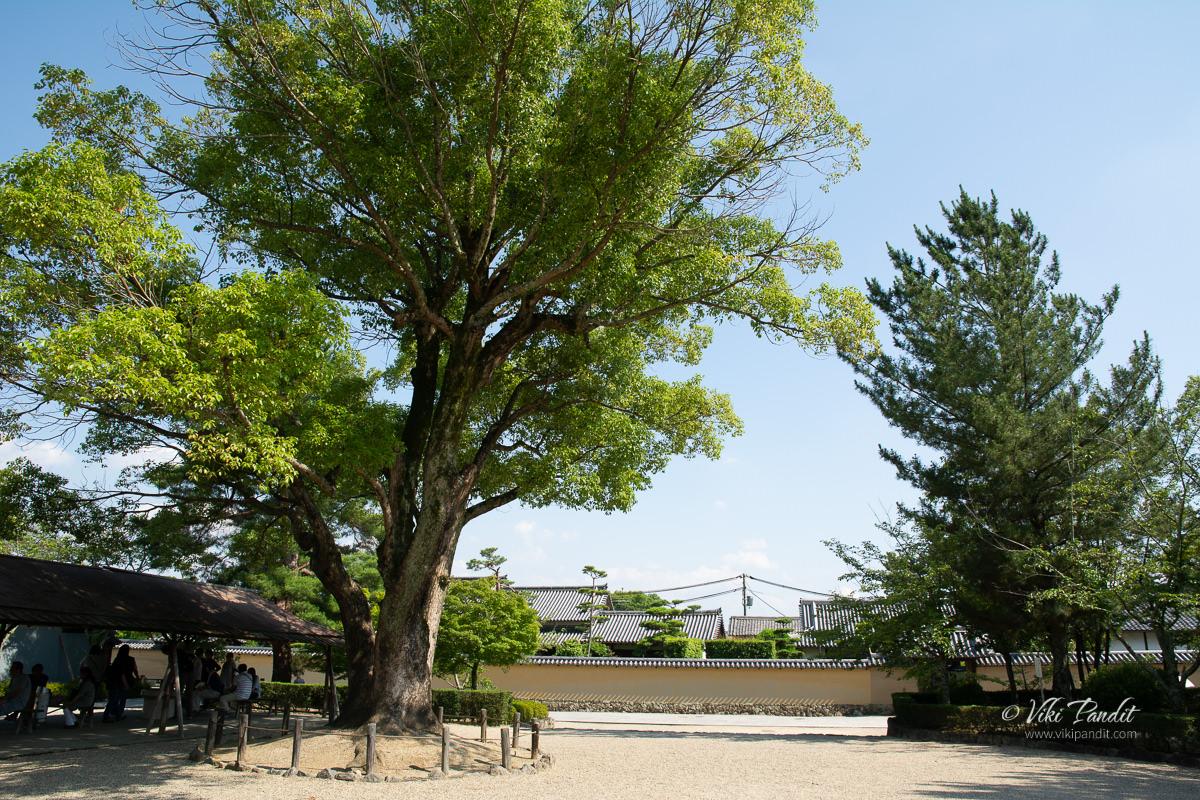 Hōryū-ji Temple Grounds