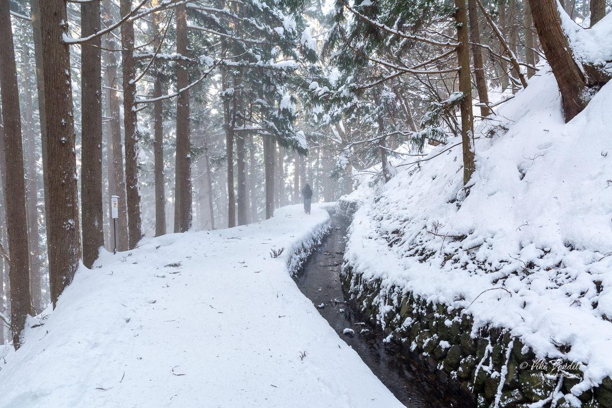 Snowing on the trail to Jigokudani Monkey Park