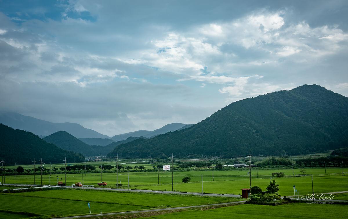 Lush Paddy fields along the way to Kanagawa