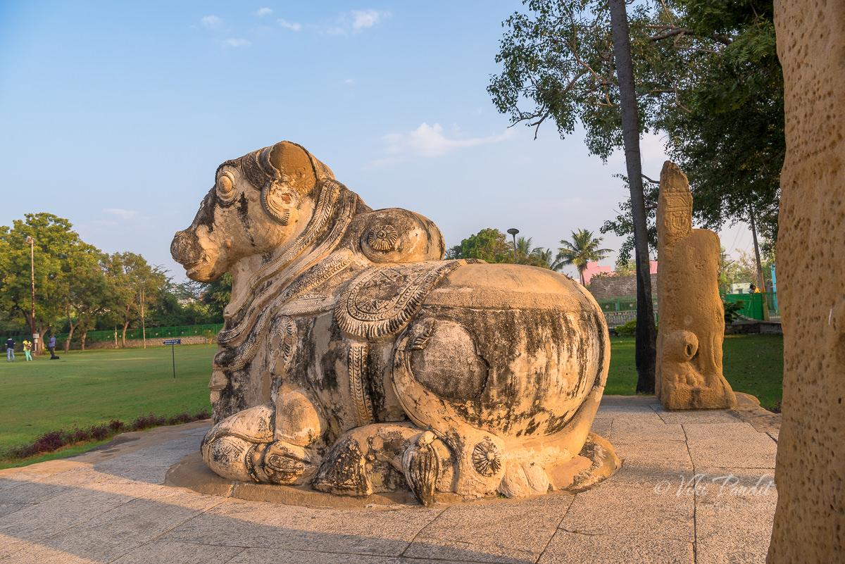 Nandi at Kanchi Kailasanathar Temple