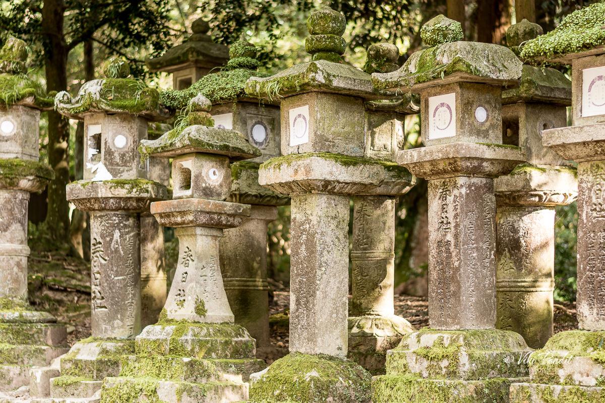 Stone lanterns in Nara Park