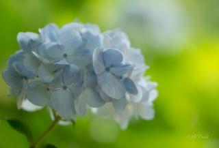 pastel-blue-ajesai