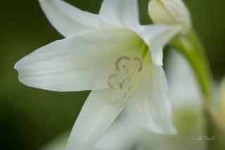 white-flower-nara