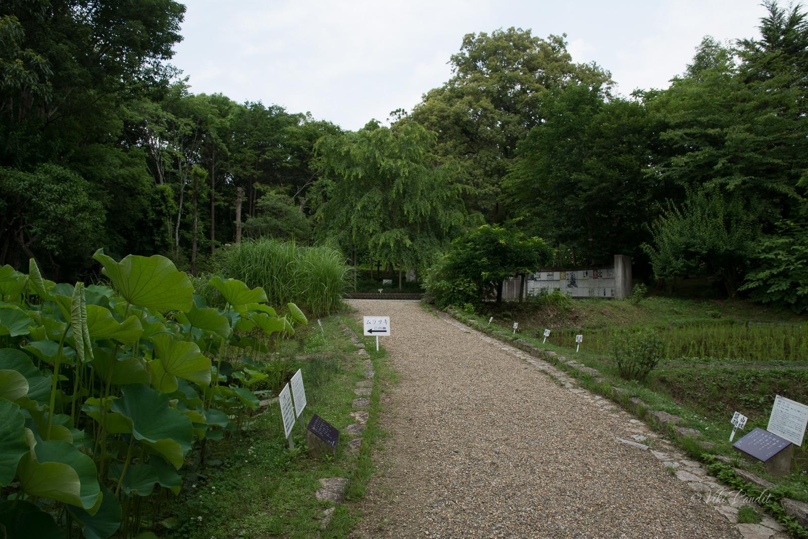 manyo-botanical-garden-gravel-path