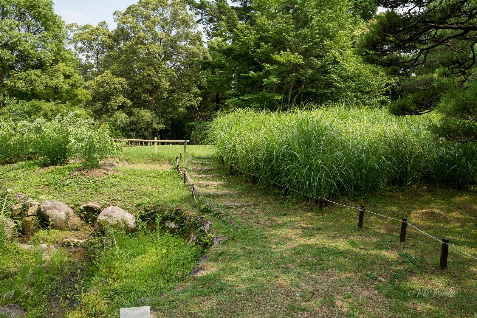 manyo-botanical-garden-path