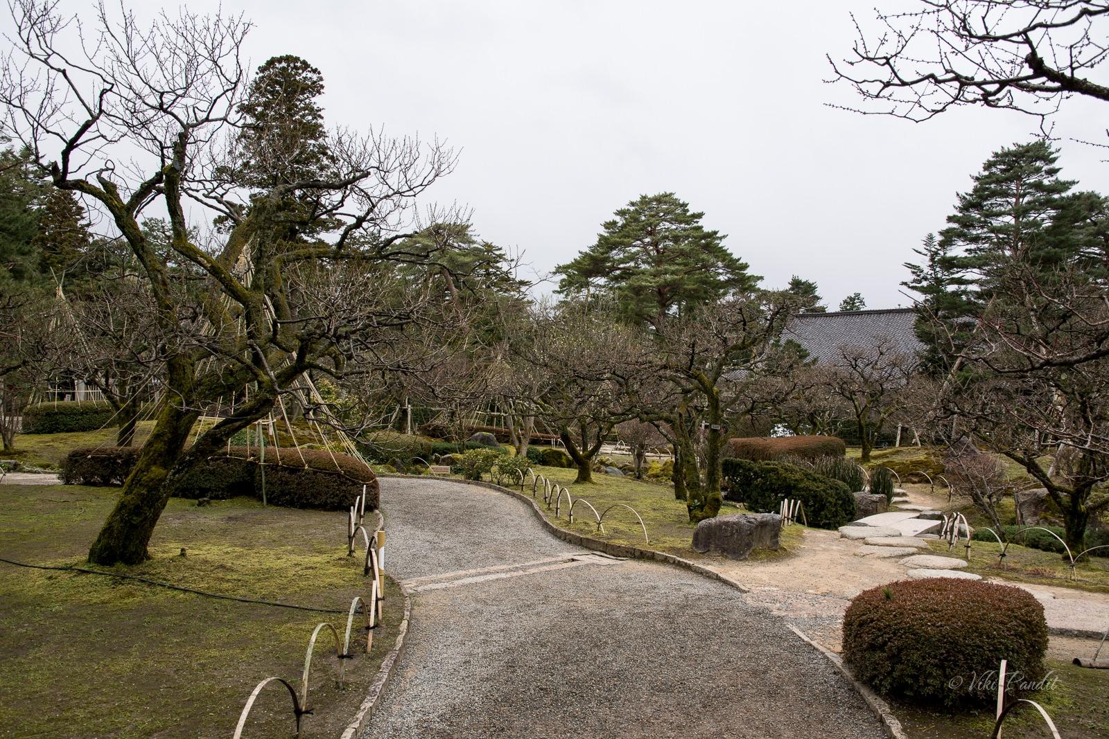 Kenrokuen Garden Pines