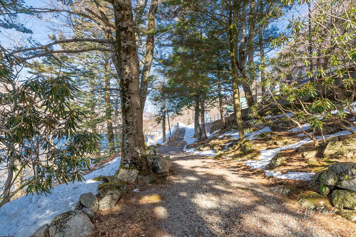 Wooded area near Lake Chuzenji