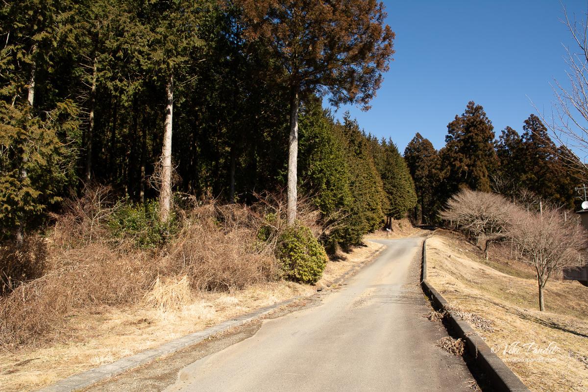 Trail near Lake Tanuki