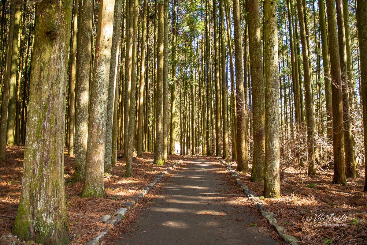 Wooded area near Lake Tanuki