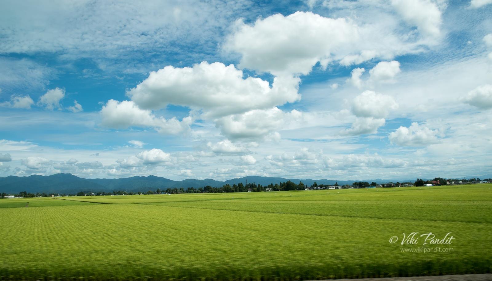 Paddy Fields, Aomori