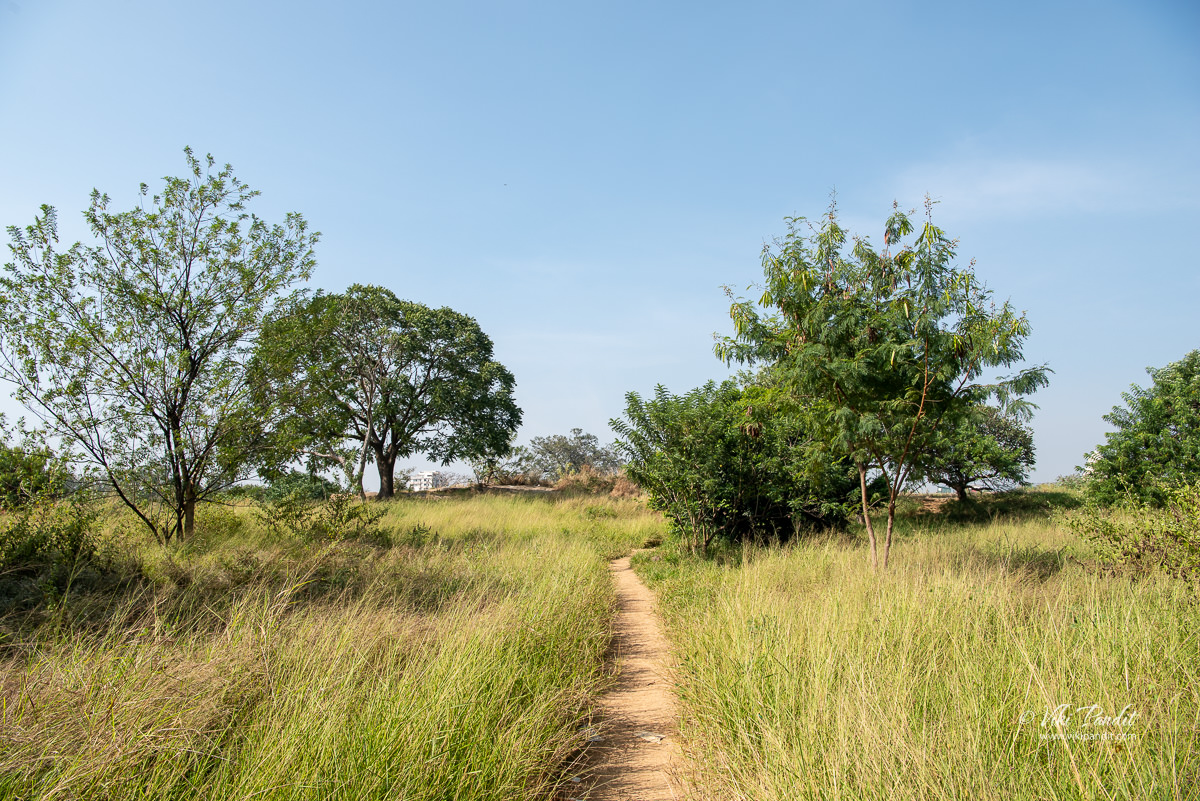 Trails-around-Lalbagh