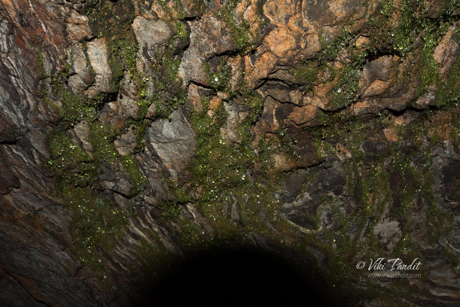 Mullayangiri Cave Moss