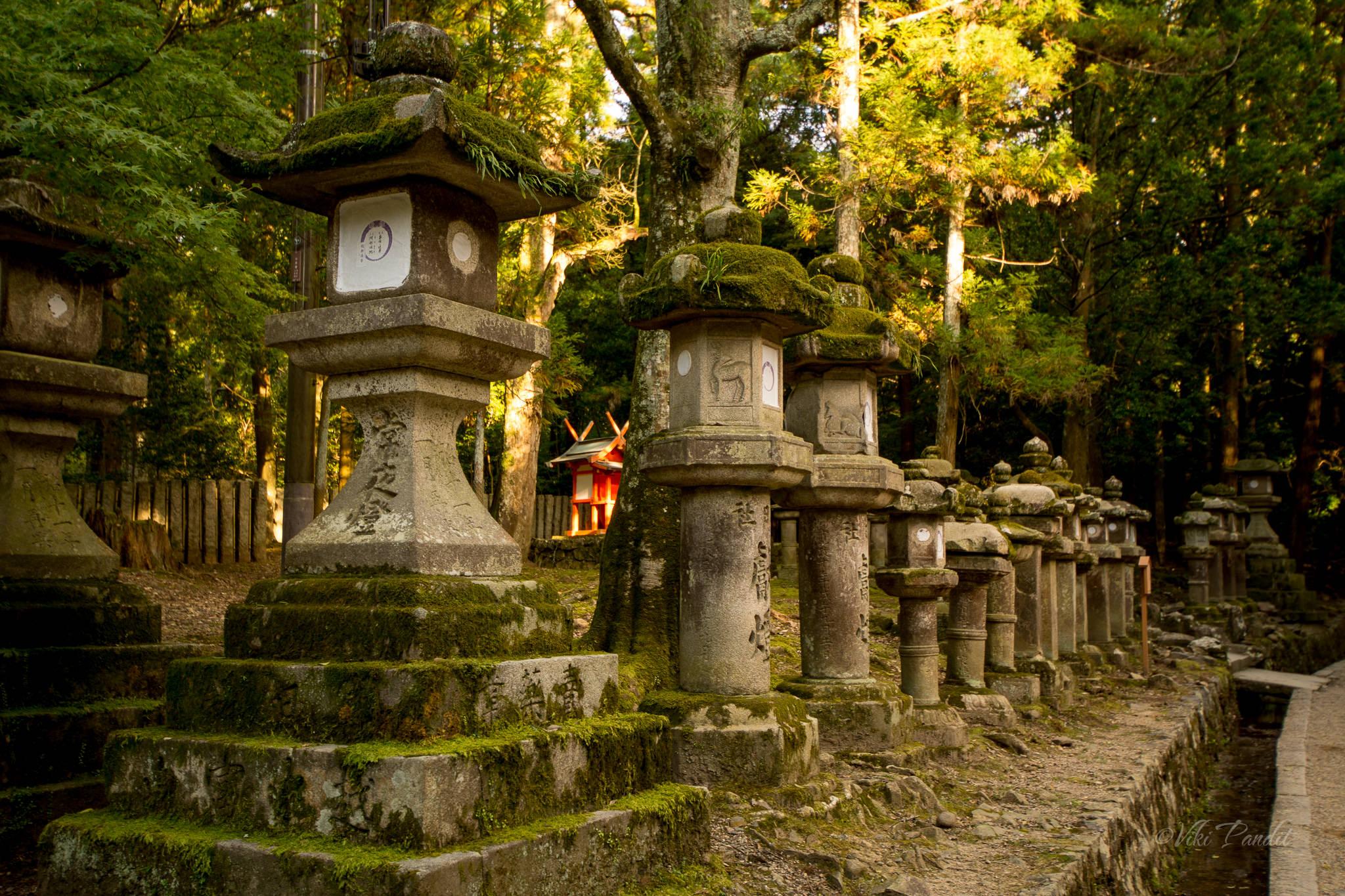 Stone Lanterns at Kasuga-Taisa