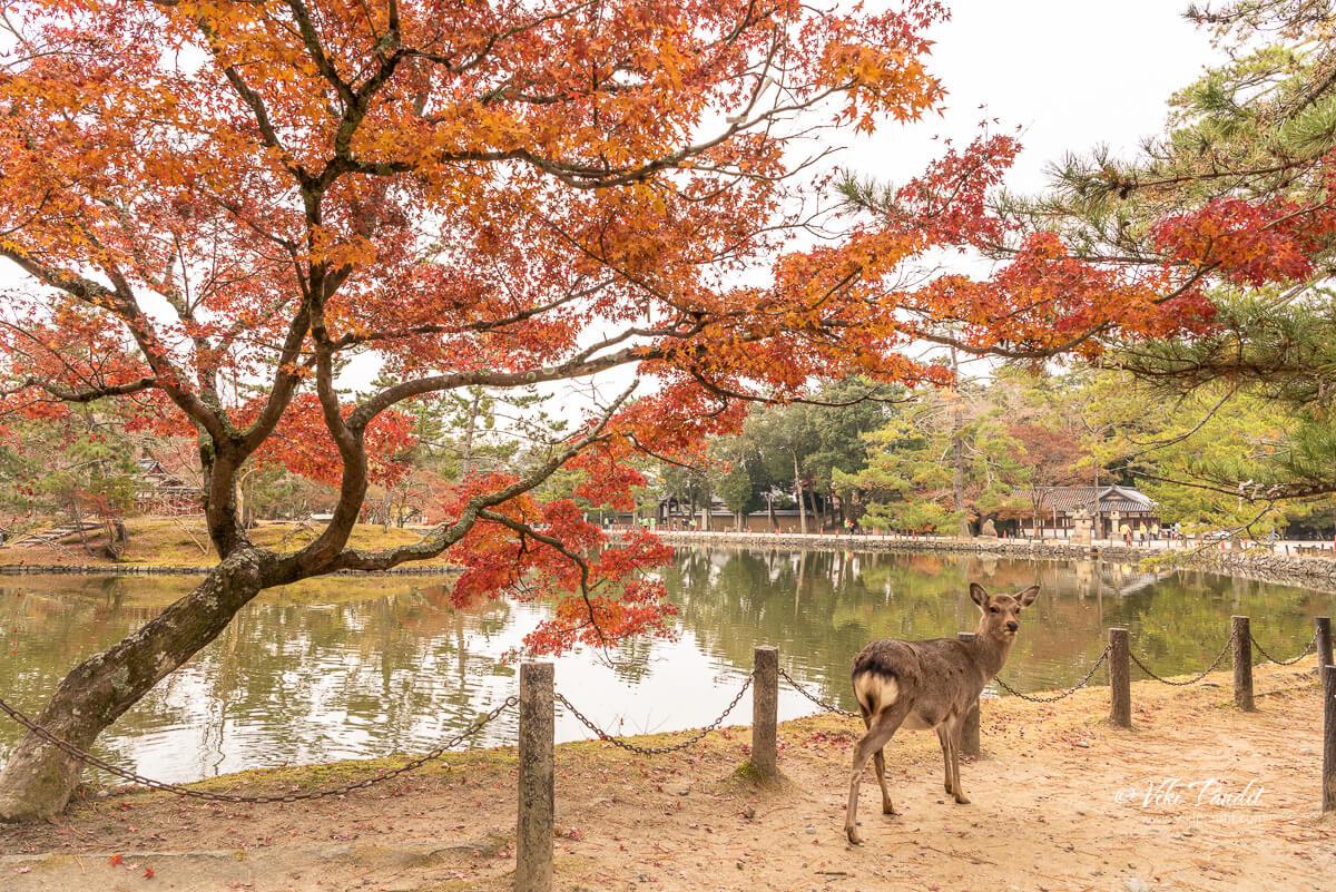 Fall Trees near Kagami-ike Pond