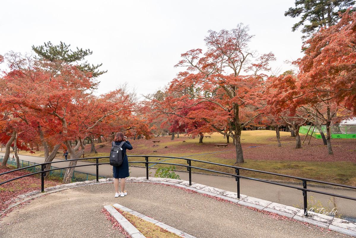 Ranita at Nara Park