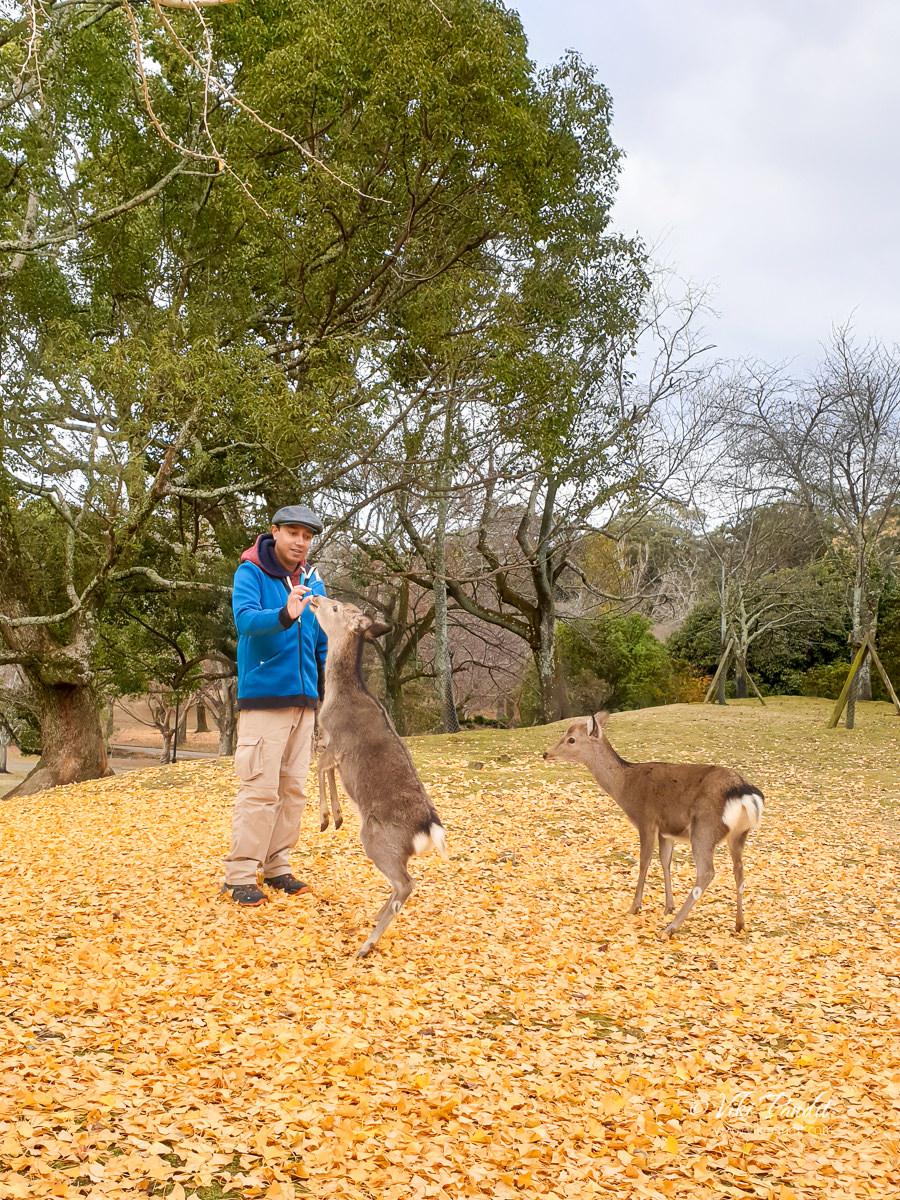 Viki with Deer at Nara Park