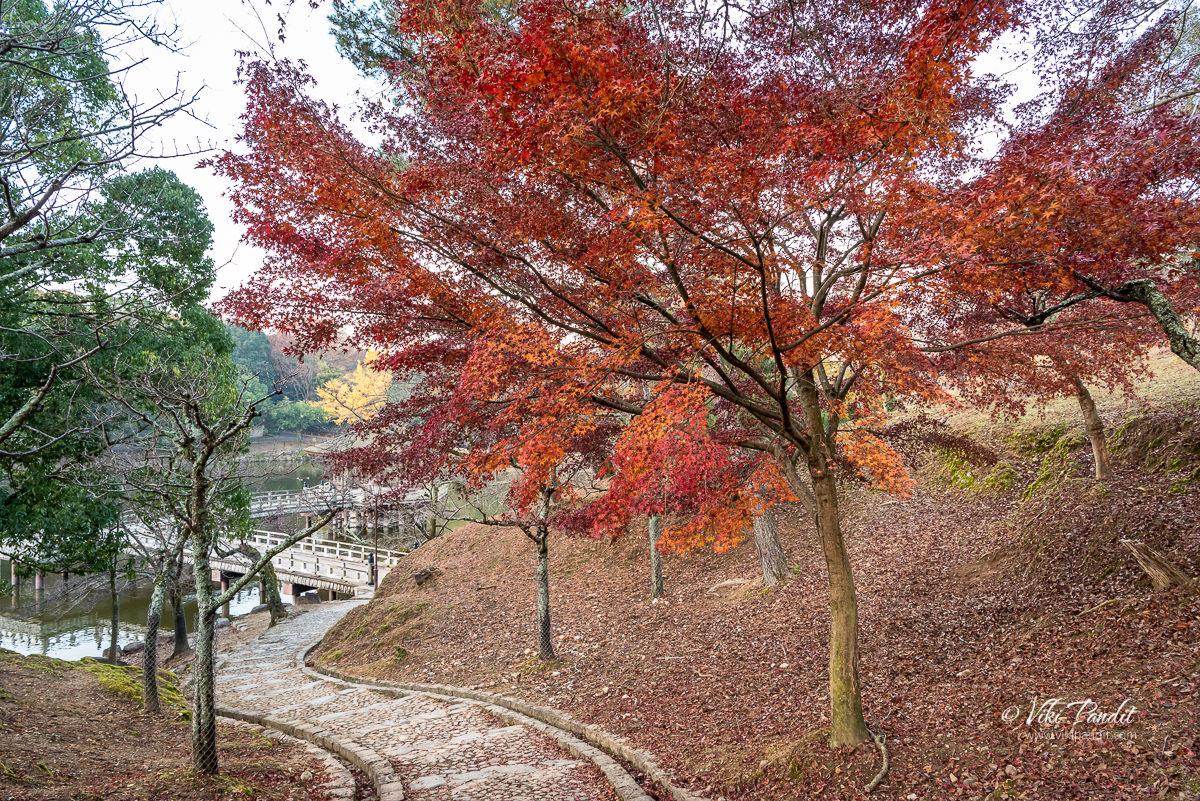 Momiji Trees near Ukimido Pavilion