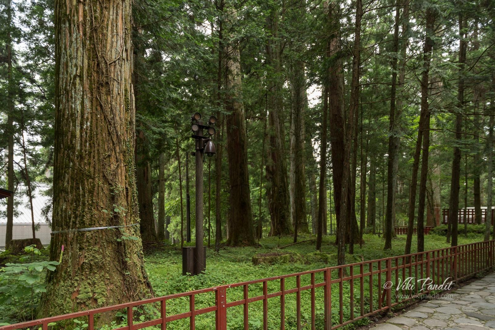 Nikko Forest