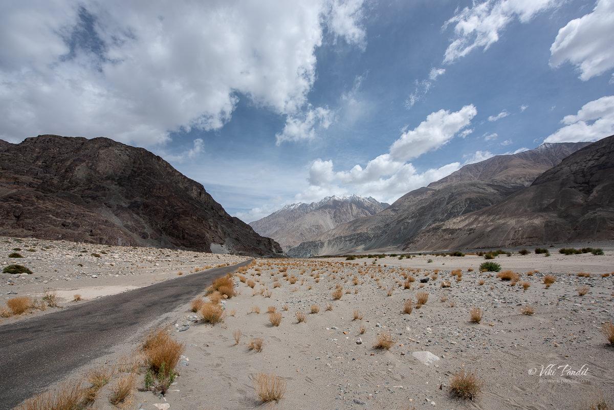 Desert vegetation around Khalsar in Ladakh
