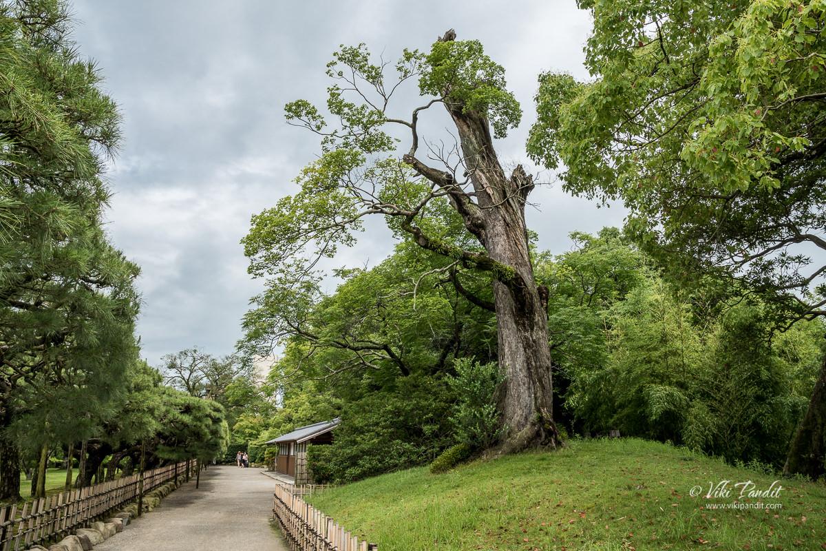 Walking around Ritsurin Garden