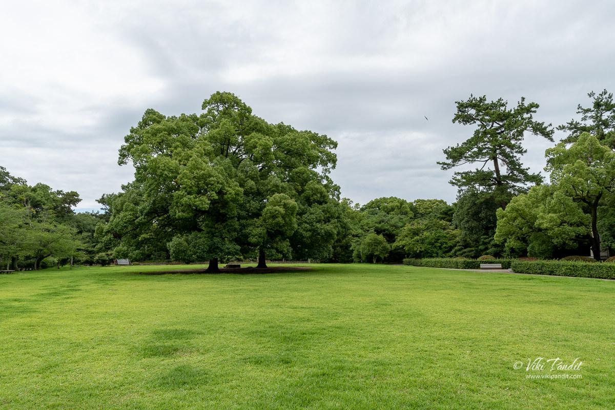 Wide expanse of green at Ritsurin Garden