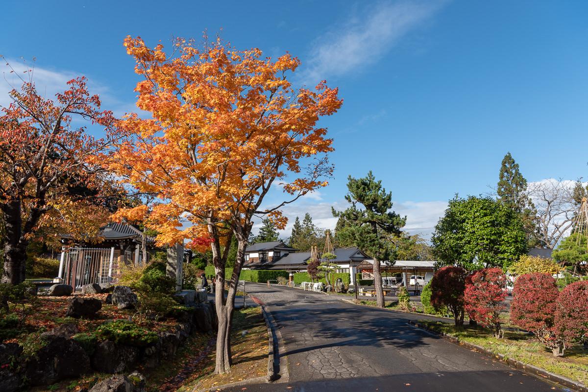 Seiryu-ji Temple Momiji