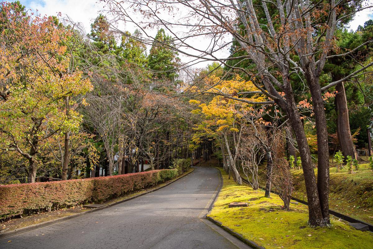Seiryu-ji Temple Grounds in Fall