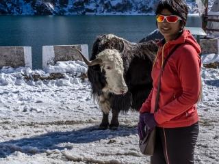 Yak Rides at Changu Lake