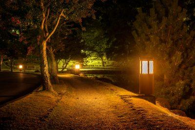 Nara Park at night