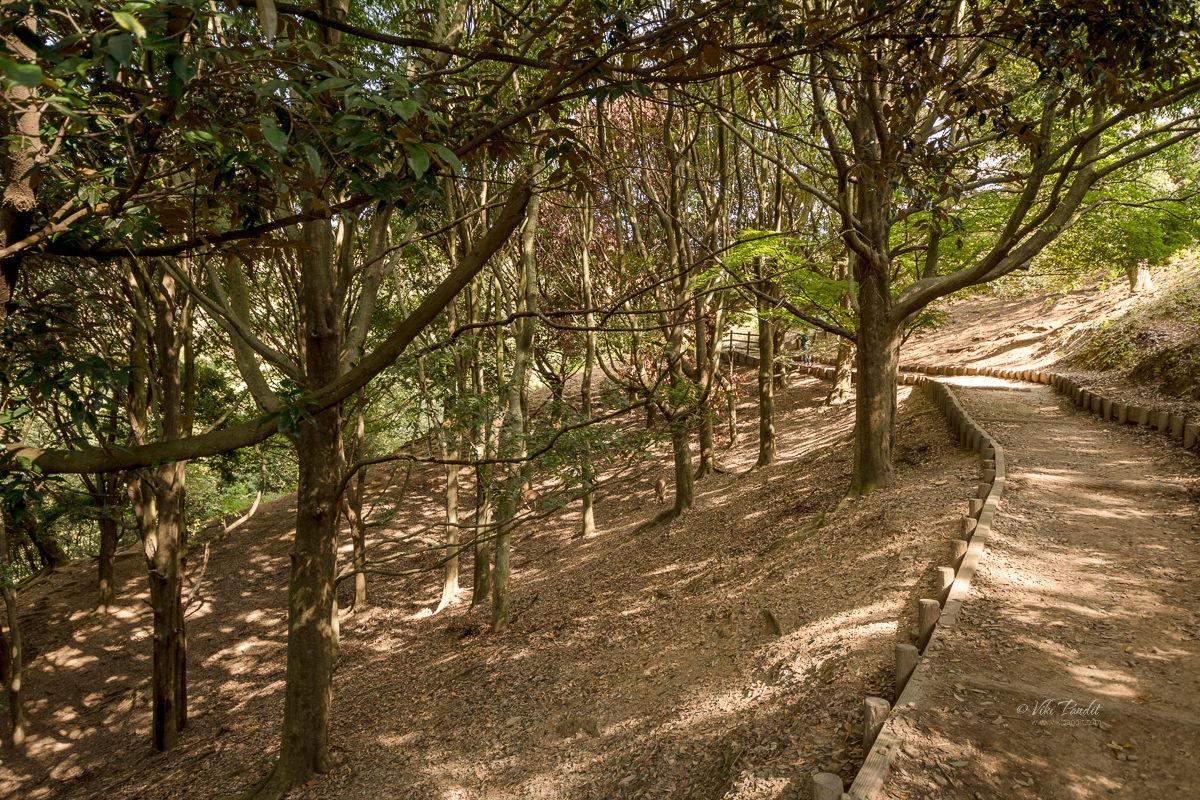 Trail to Wakakusa Summit