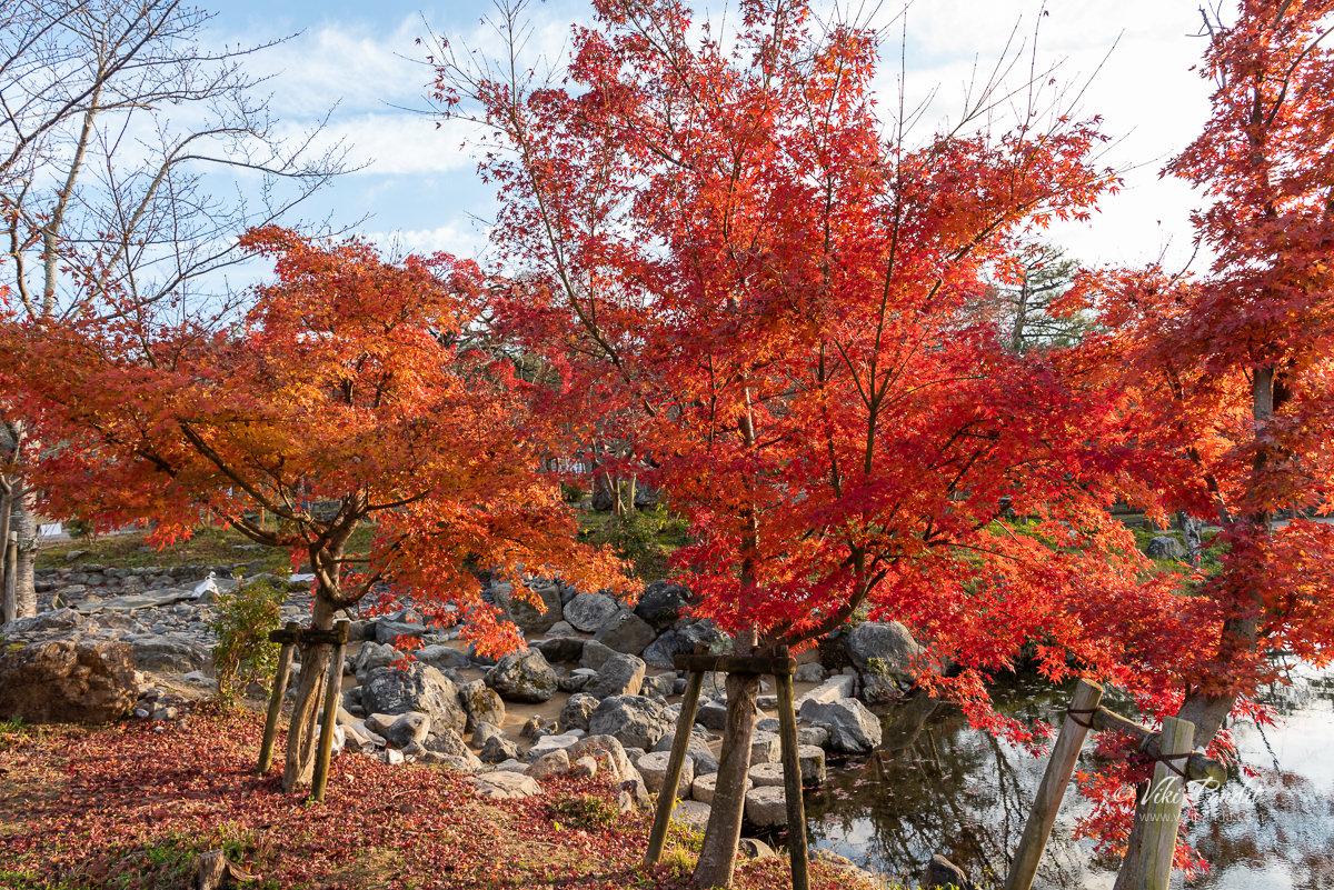 Fall trees near Yasaka Shrine